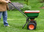 Fertilizing Your Lawn and Watering a Lawn