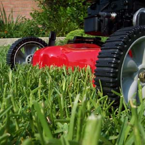 Grass Mowing – Lawn Maintenance Schedule