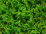 Lawn Weed Control and Moss Control on Garden Lawns