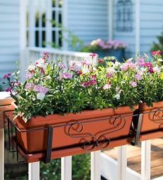 Window Boxes and Hanging Flower Baskets