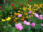 How to Plan and Design a Flower Garden