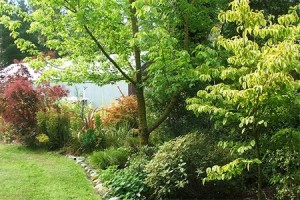 Trees-and-Shrubs-landscaping-garden
