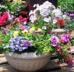 Guide to Container Gardening