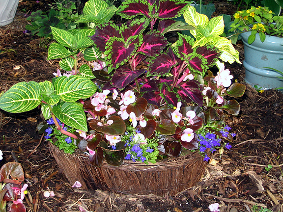 Planting in containers container gardening ideas for Container gardening ideas