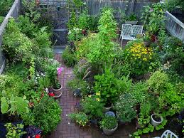 plants-for-containers