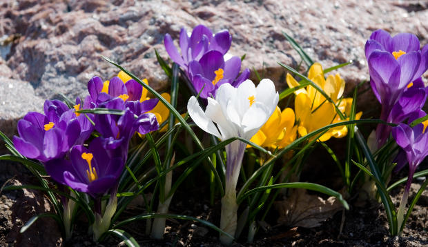 Spring Blooming Bulbs – Propagating Bulbs