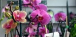 Caring for Orchids – Humidity