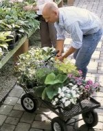 Choosing and Buying Water Garden Plants