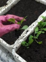 Composts for Greenhouse Plants