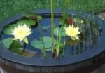 Container Gardening – Water Garden Pond