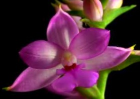History-of-Orchids-and-How-Orchids-are-Named