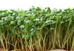 How to Grow Cress