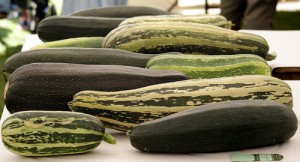 How-to-Grow-Marrows