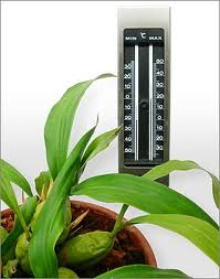 Orchid-Care-the-right-temperature