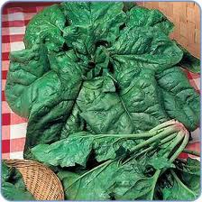 guide to growing-spinach