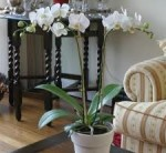 Orchids – Where to Position Your Orchid Plants