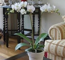 where to position your orchids