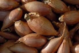 guide to growing shallots