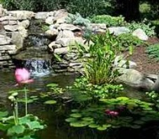 Small garden pond and pond plants autumn care for Small garden pond care