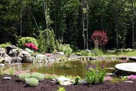 Small Garden Pond and Water Garden Plants