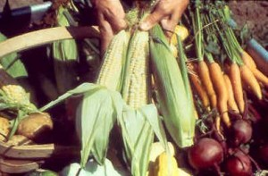 Harvesting-and-Storing-Home-Grown-Vegetables
