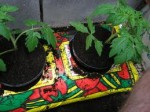 Ways of Growing Vegetables – Growing Bags