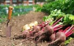 Planning for Home Grown Fruit and Vegetables