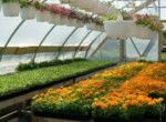 Getting the Best from Your Greenhouse
