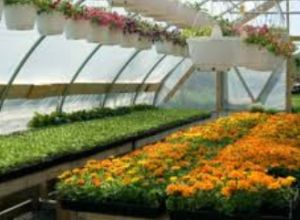 benefits-of-a-greenhouse