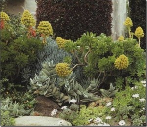 aeoniums-crassulas-echeverias-and-sedums