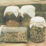 Sprouting Your Own Seed Mixtures