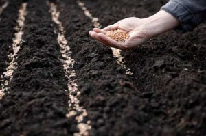 rules for sowing seeds