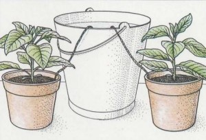 watering-continues-in-your-absence-by-conveying-water-from-bucket-to-pots-along-improvised-wicks