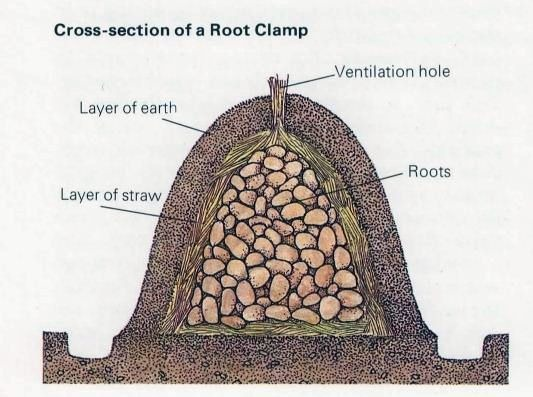 cross section of a root clamp