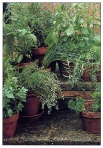 herbs look stunning in pots