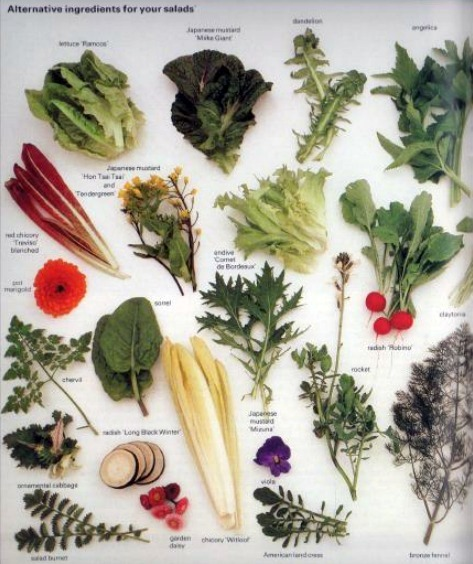 Winter Salads for Home Growing