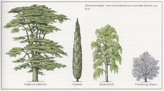Size-and-Shape-of-Trees