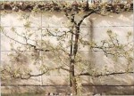 Espalier Trees: How to Train Fruit Trees