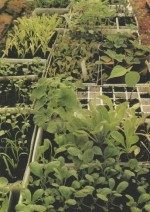 Sowing Methods for Vegetables