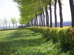 Different Types of Hedges for the Home Garden