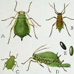 Specific Garden Pests and Diseases