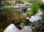 Design and Location for Your Garden Pond