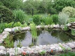 Types of Pond Containers