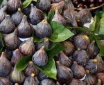 Varieties of Figs to Grow Yourself