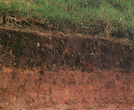 Digging a straight-sided hole in your garden will reveal your soil profile: an upper humus-rich layer of top soil lies over a much poorer layer of sub-soil which in turn grades into the bed rock