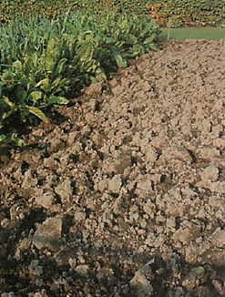 large clods left on the soil surface during autumn digging will be broken down gradually and efficiently by winter frost
