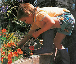 quick growing annuals will stimulate a child's interest