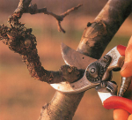 Training and Pruning Plants, Trees and Shrubs