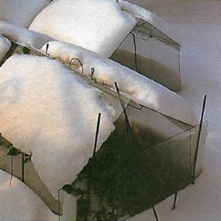 snow should be left on cloches for valuable insulation