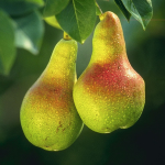 Guide to Growing Pear Trees